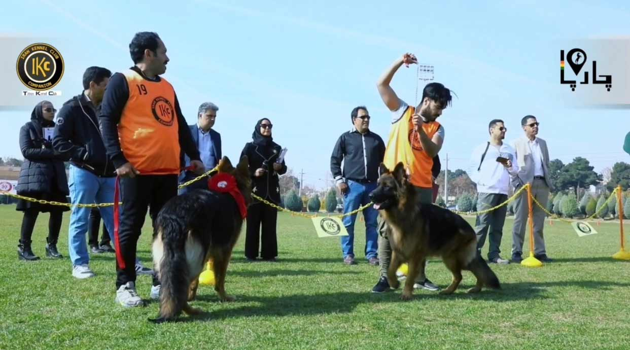 رقابت سگ ها
