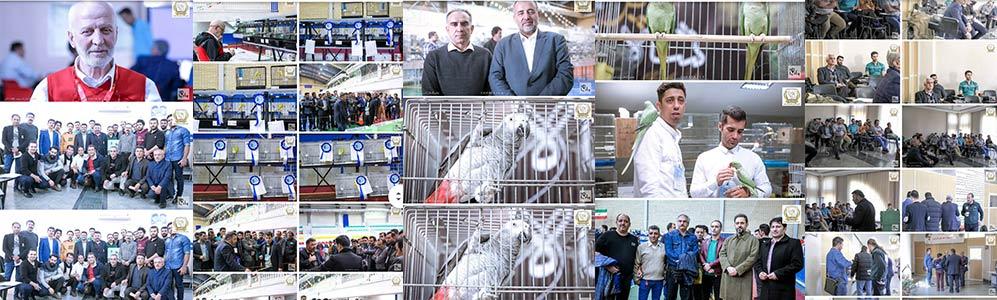 عکس های نمایشگاه قناری ساوه