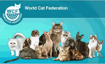 فدراسیون گربه