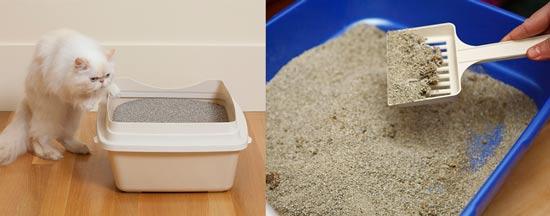 ظرف خاک گربه