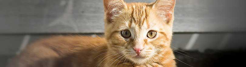 وسایل گربه