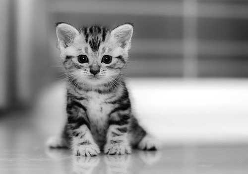 آماده اید گربه داشته باشید