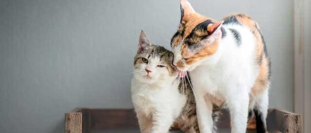 بچه گربه یا گربه بالغ