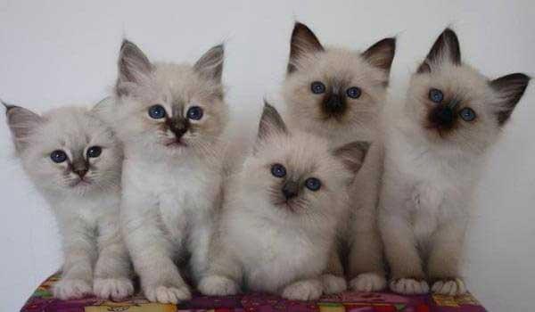 نگهداری چند گربه در خانه