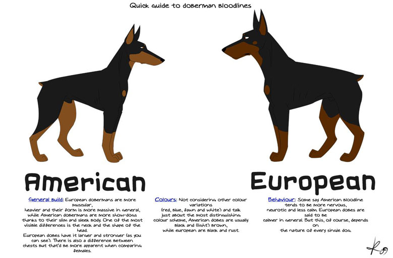 دوبرمن آمریکایی و سگ دوبرمن اروپایی آلمانی