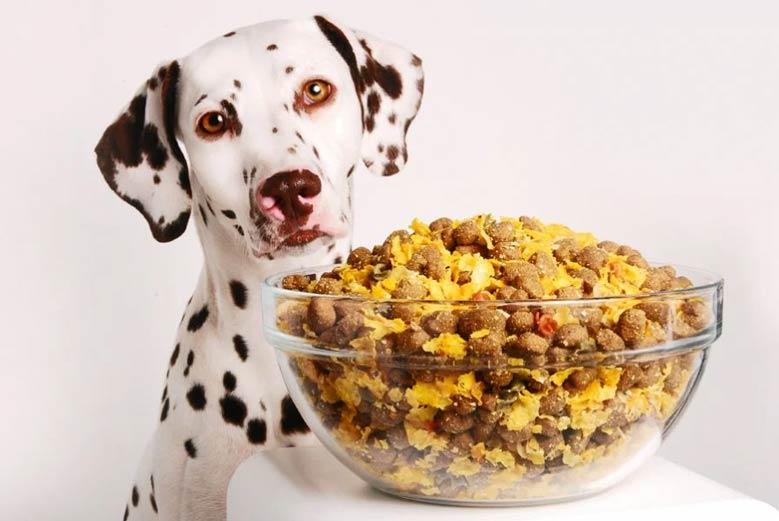 غذای خیس تر تازه سگ
