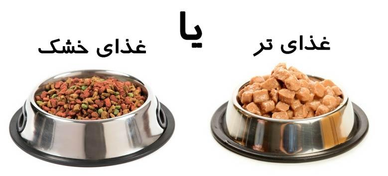 غذای خشک سگ با غذای تازه کدام بهتر است