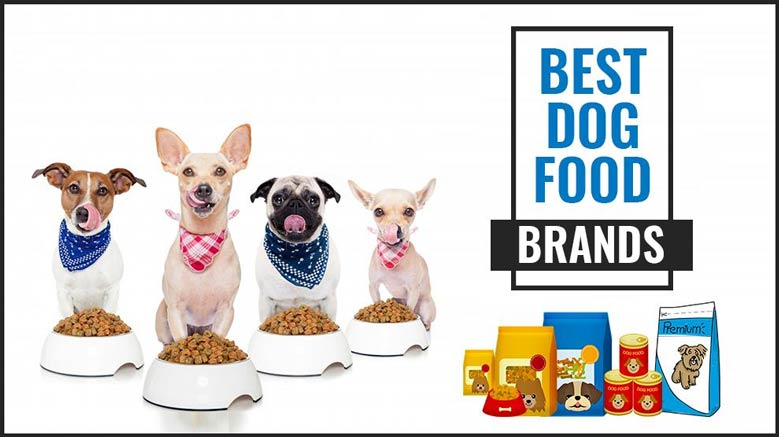 بهترین غذا برای سگ ها