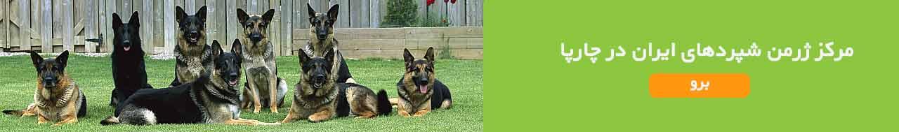 فروش سگ ژرمن