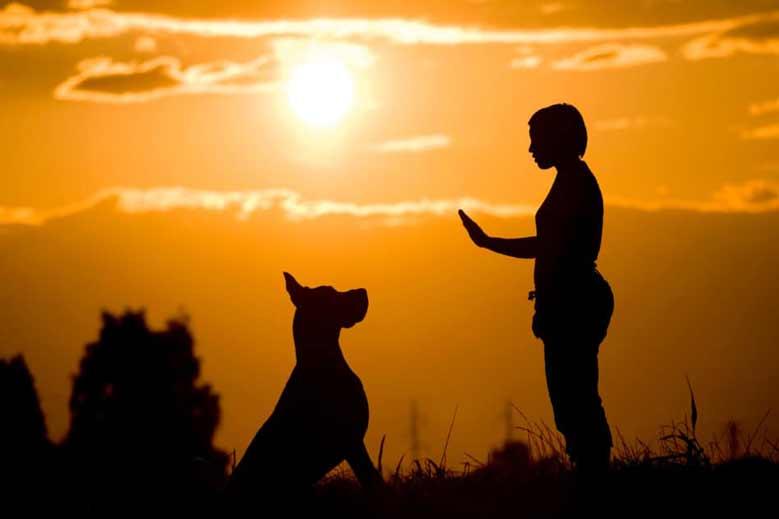 آموزش و تربیت سگ گریت دین