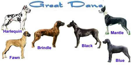انواع رنگ سگ گریت دین