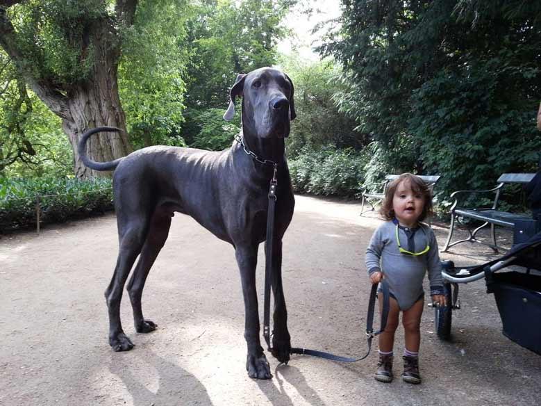 سگ گریت دین و کودکان