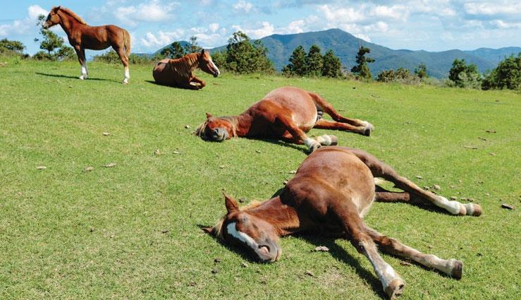 خوابیدن اسب