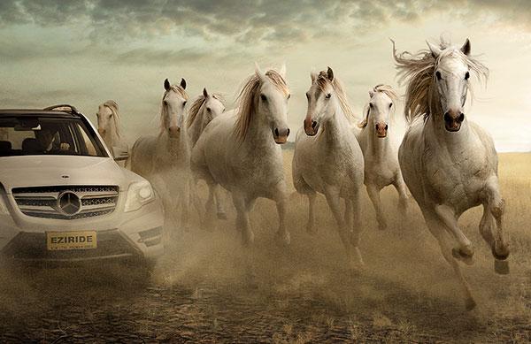 سرعت اسب