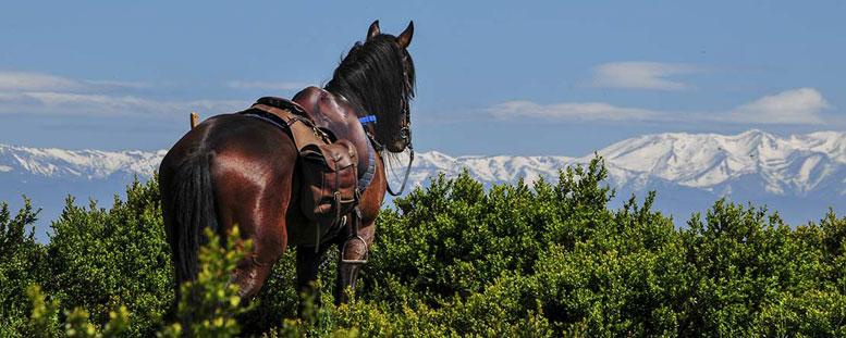 اطلاعات اسب