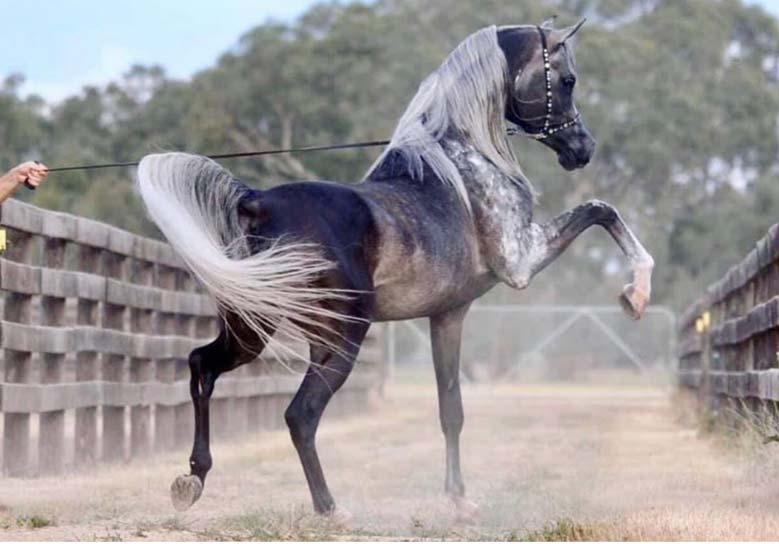 نام اسب ایرانی و خارجی
