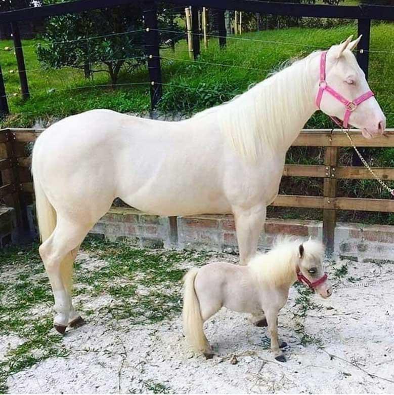 اسم برای اسب نر و ماده خارجی و پونی