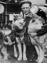 اصالت سگ هاسکی