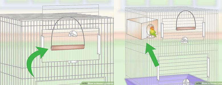 محل مناسب برای زندگی طوطی برزیلی