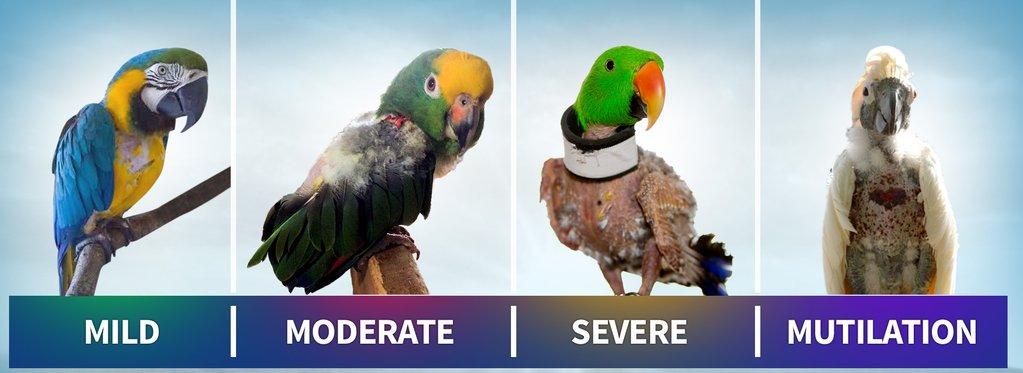 ریزش پر غیر عادی در پرندگان