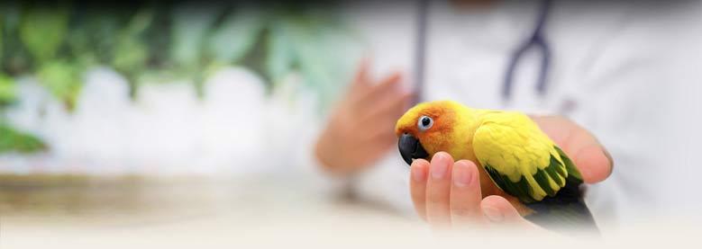 درمان ریزش پر پرندگان
