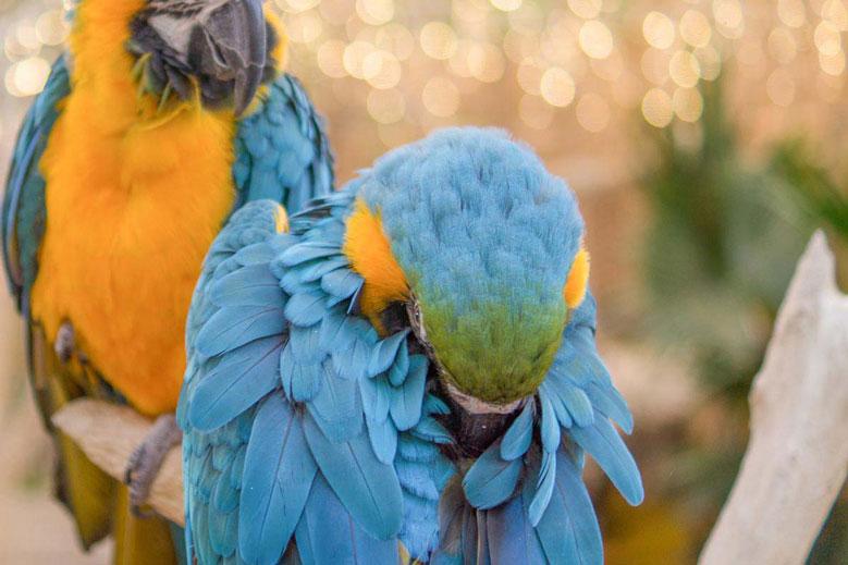 علل ریزش پر در پرندگان خانگی