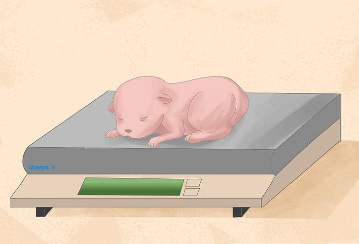 وزن توله سگ