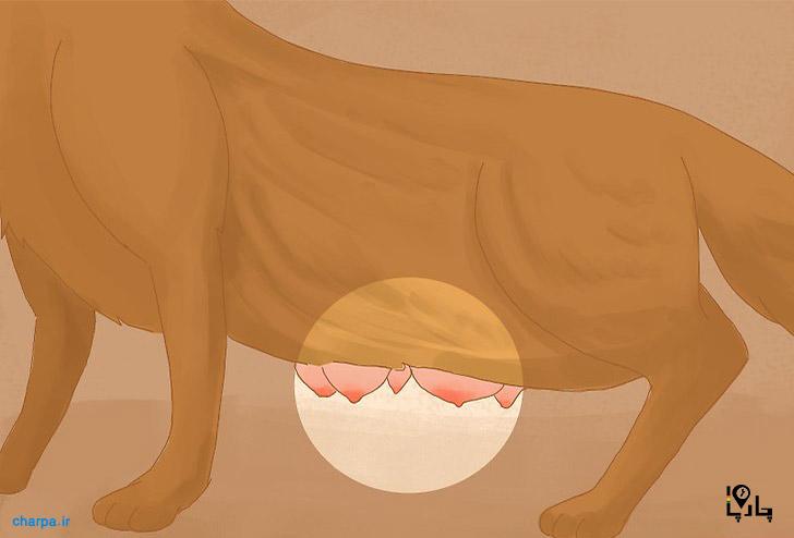 شیر مادر برای توله سگ