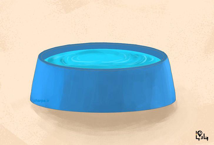آب برای توله سگ