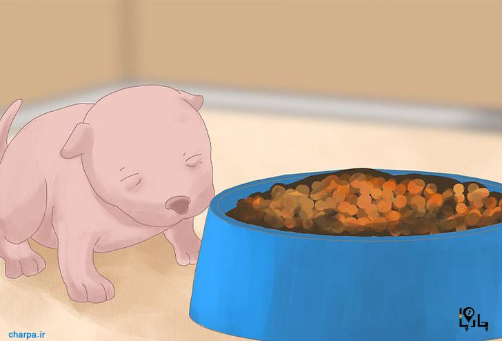 رفتار توله سگ تازه متولد شده