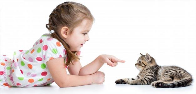 گربه حیوانات خانگی برای کودکان