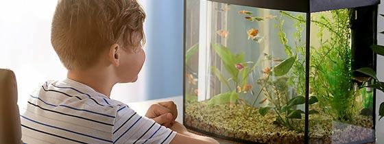 ماهی حیوان خانگی برای کودکان