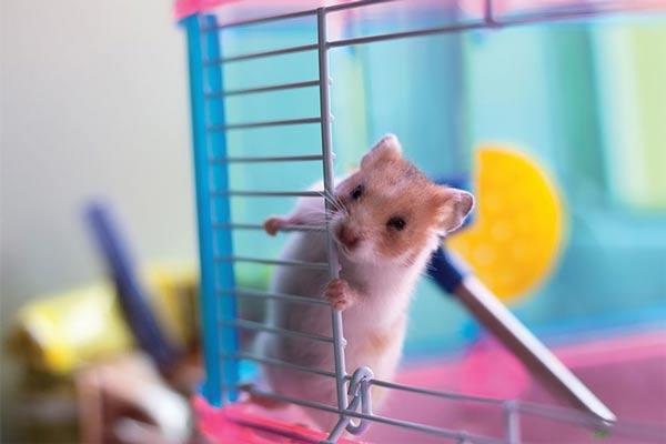 موش حیوان خانگی مناسب کودکان