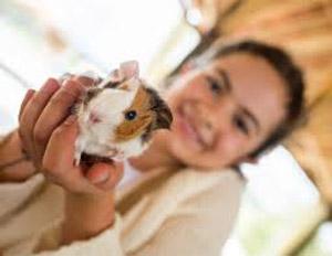 همستر حیوان خانگی برای کودکان
