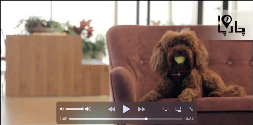 ویدیو حیوان خانگی برای بچه ها
