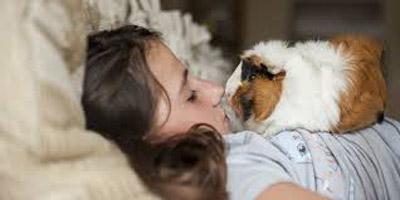 خوکچه هندی حیوان خانگی کودکان