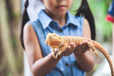 خزندگان سوسمار ایگوانا برای کودکان