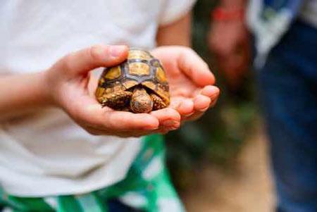 لاکپشت حیوان خانگی مناسب کودکان