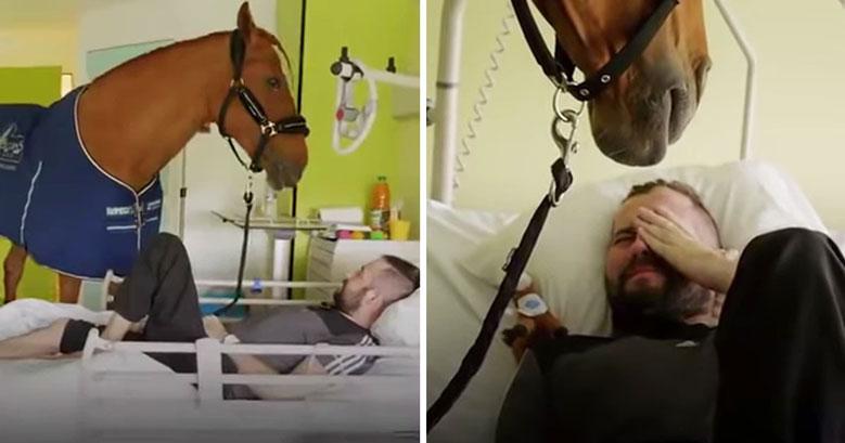 اوتیسم و اسب برای شفا