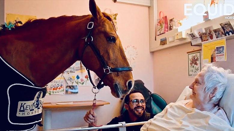 اسب درمان و شفای مریضی