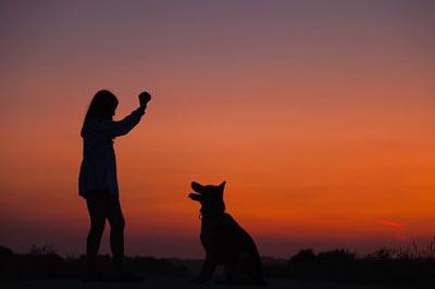 حیوانات خانگی برای شفای افسردگی