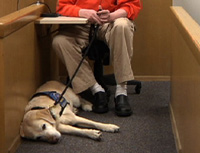 حیوانات در دادگاه ها با مجرمین