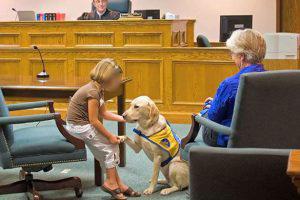 درمان حیوانات مجرمین