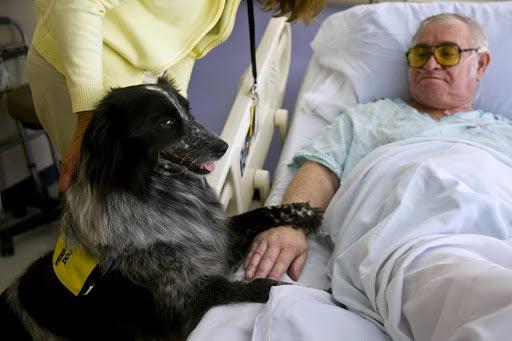 سگ در بیمارستان