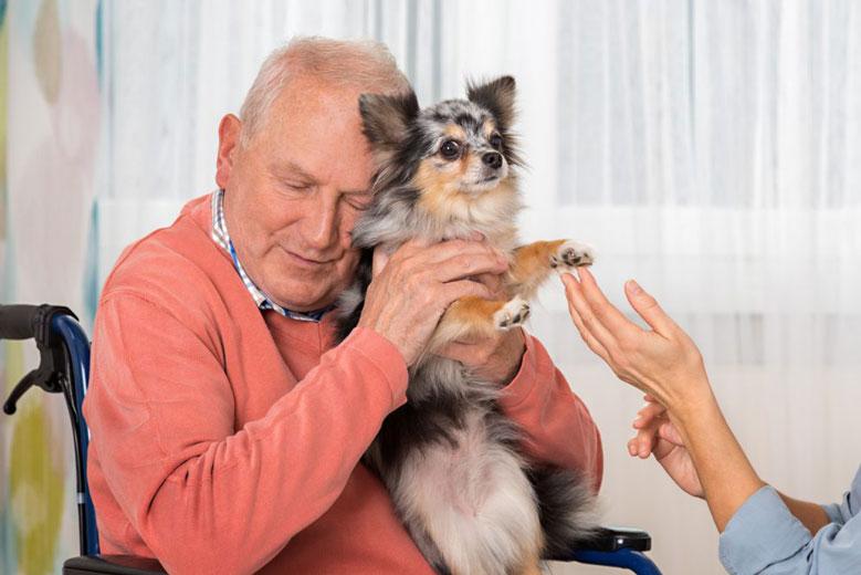 شفای جسم و روح با حیوانات