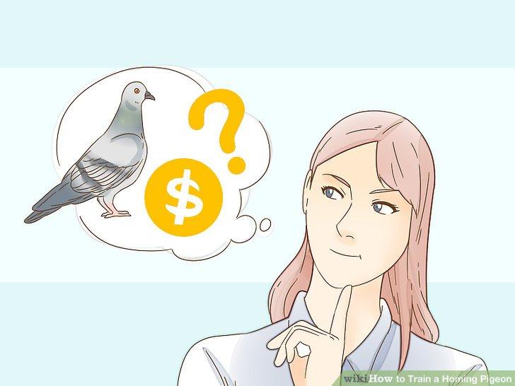 هدف از خرید کبوتر