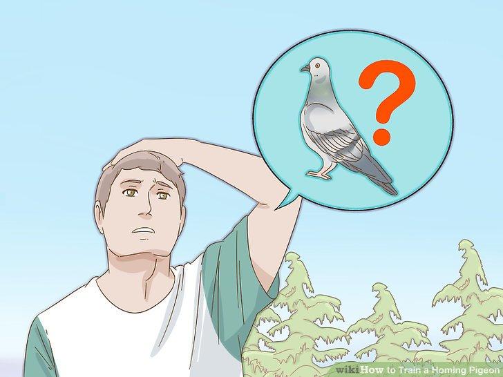 برنگشتن کبوتر به خانه