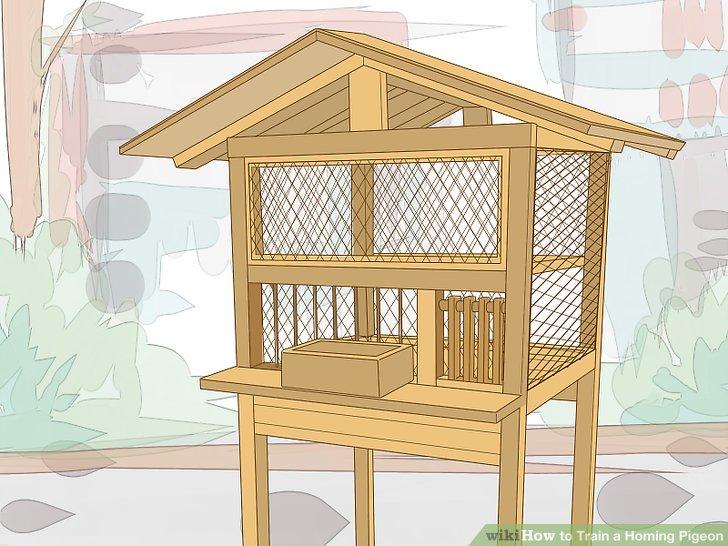 ساخت لانه کبوتر