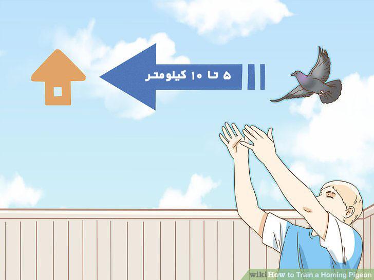 تمرین کبوتر پرشی